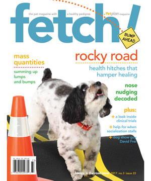 Fetch Magazine
