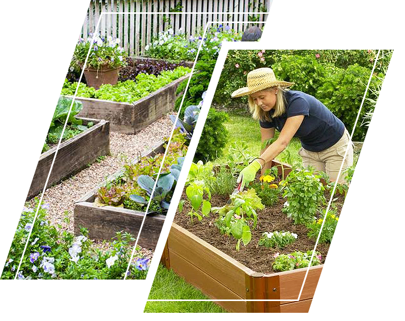 A woman attending to her plants on raised bed garden