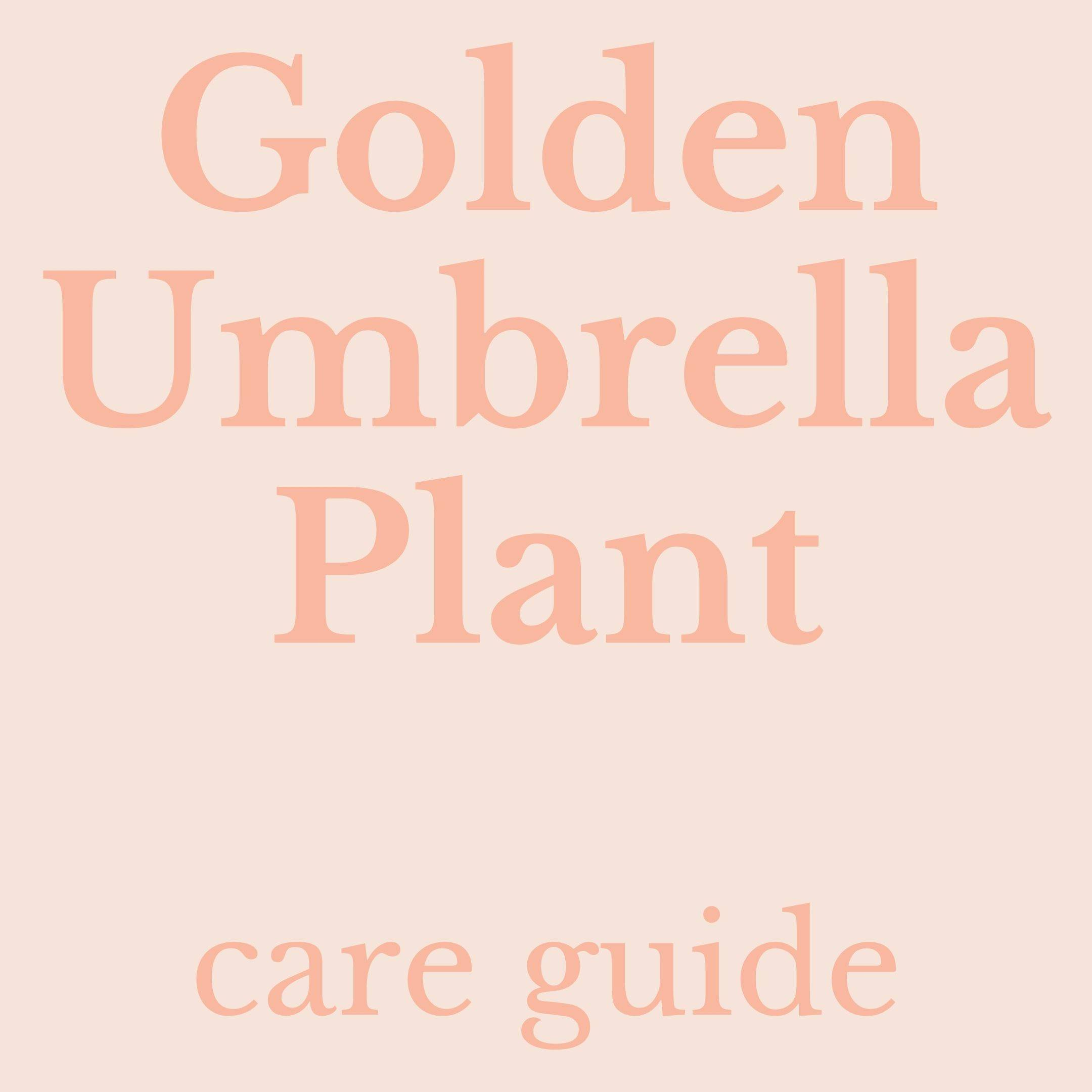 Drawing of golden umbrella plant