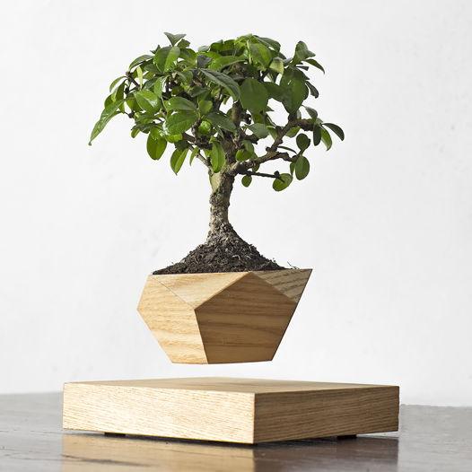 Левитирующее растение Wood Бонсай светлый