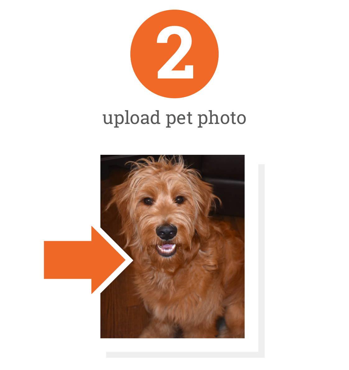 dog portrait - upload photo
