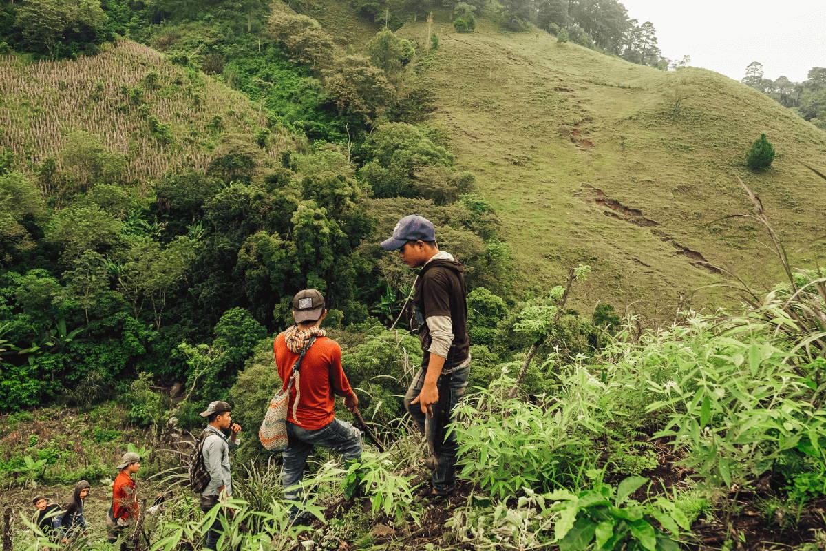 Workers on mountainous coffee farm.