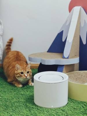Petree Automatic Cat Water Fountain Dispenser