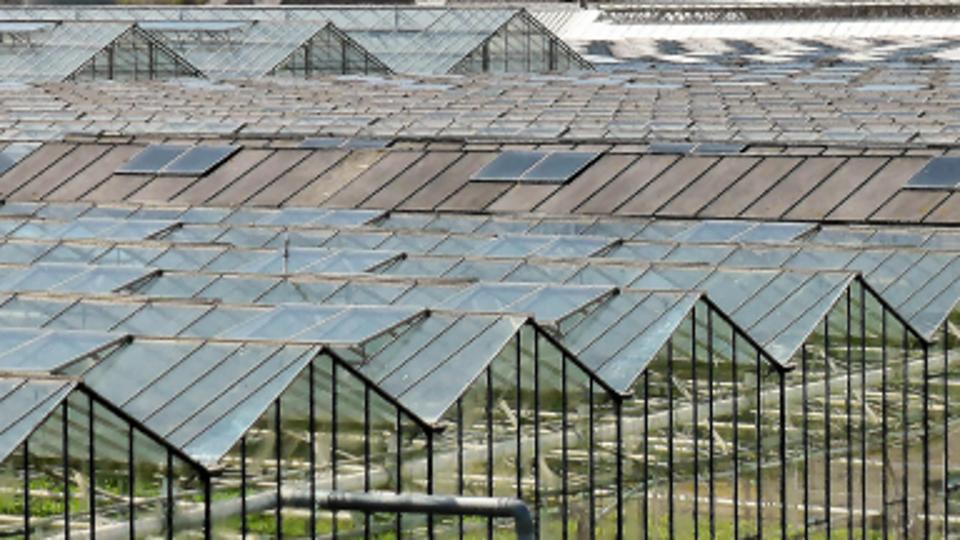 Kansenseminar ontwikkelingen tuinbouwsector in Turkije