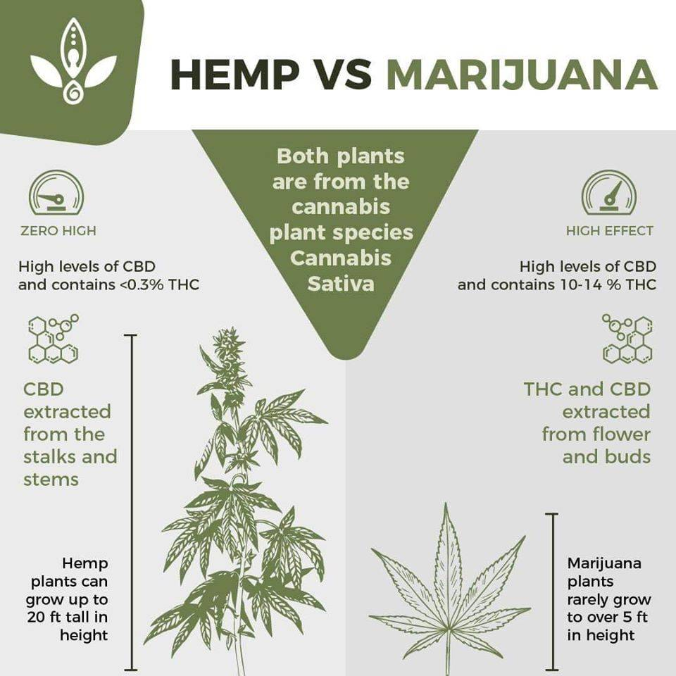 what is the difference between hemp marijuana