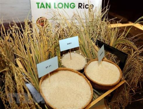 Vietnam's rice exports hit 5.2 million tonnes in ten months