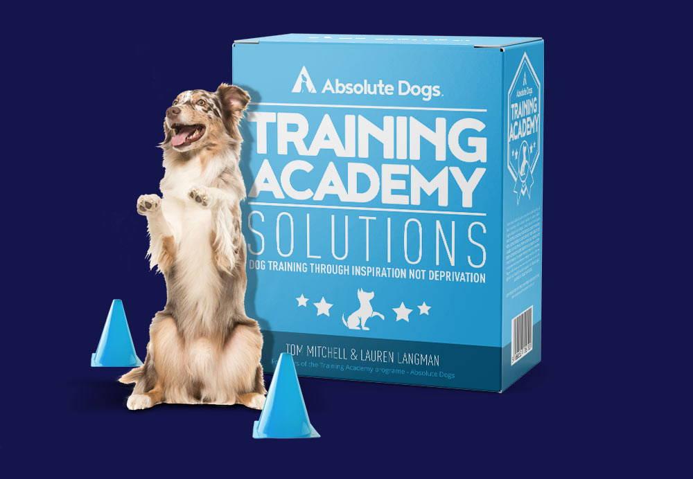 Training Academy – absoluteDogs