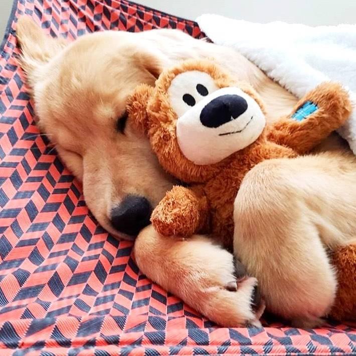 KONG stuffed dog toys