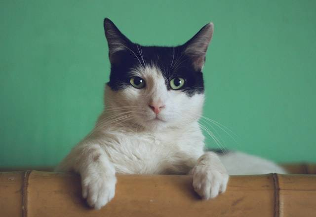 Microchip cat, outdoor cat,  Photo by Manja Vitolic on Unsplash