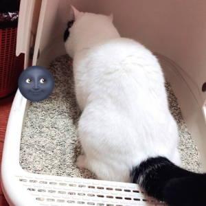 ViviPET Tofu Cat Litter Customer Review