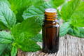 peppermint leaves with open essential oil vial