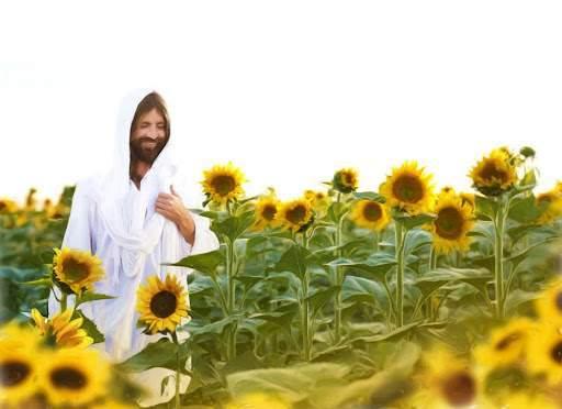 Jesus walking through a field of tall sunflowers.