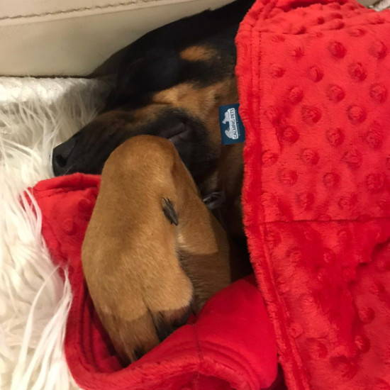 Sensory minky weighted blanket for a medium dog