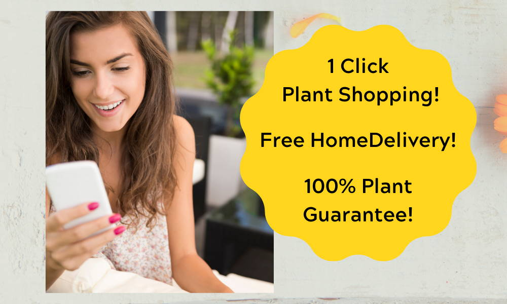 Easy 1 click Plant Shopping. Free Home Delivery by us- no shipping in boxes. 100% satisfaction Guarantee.