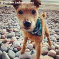 T Travel Dog Instagram Page