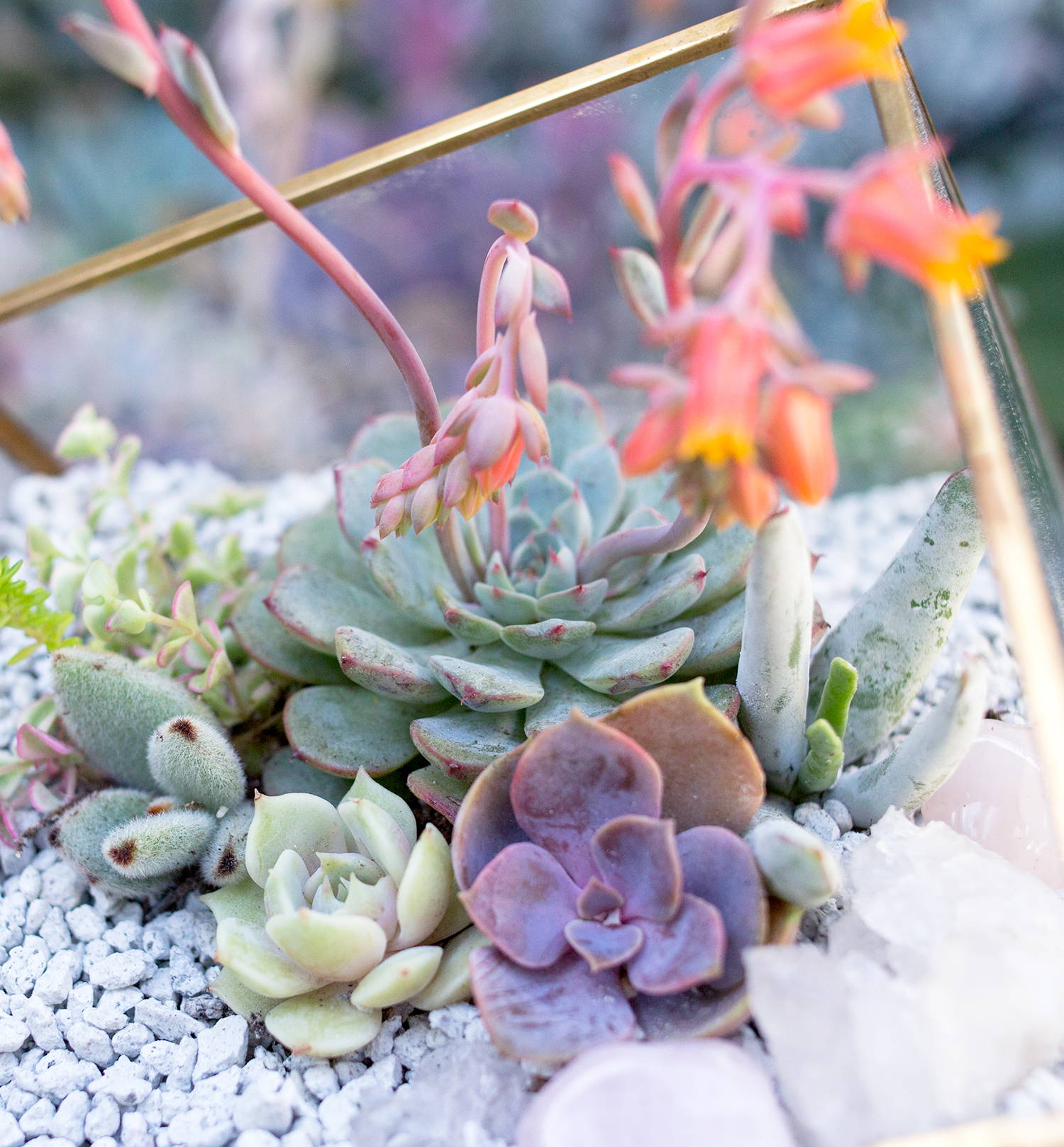 Diy Succulent Terrarium Botanical Bright Adding A Lil Beauty To Your Everyday