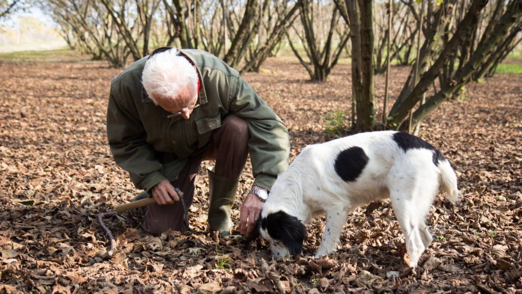 Truffle-hunting Demonstration with a Local Expert and His Beloved Dog | Revittle