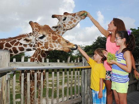 Miami & Broward Family Fun Day