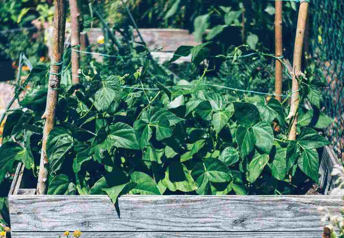 Cyclosas - Faire son potager soi même, légumes fruits enfant activité
