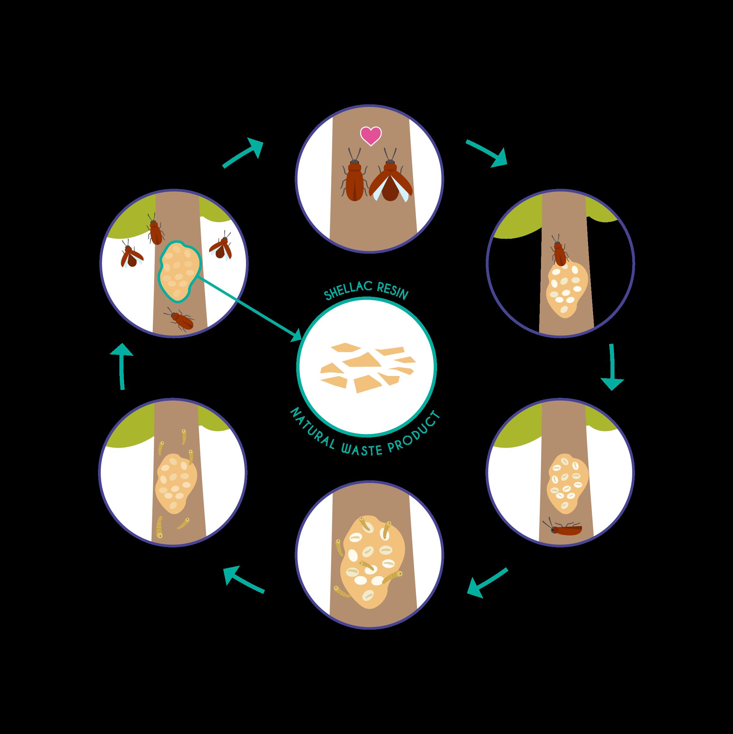 Shellac process