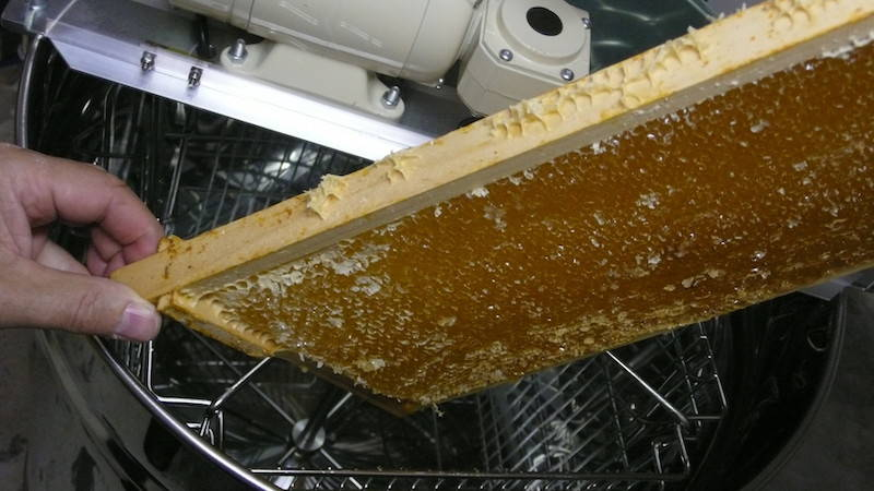 Das entdeckelte Rähmchen kommt in die Honigschleuder