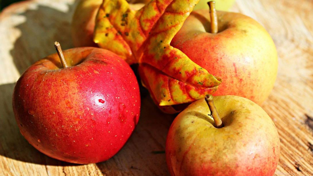 Äpfel unterstützen die Reinigung des Hundedarms