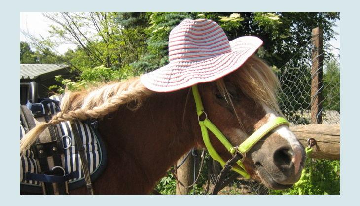 ponnyland b pferd mit zopf