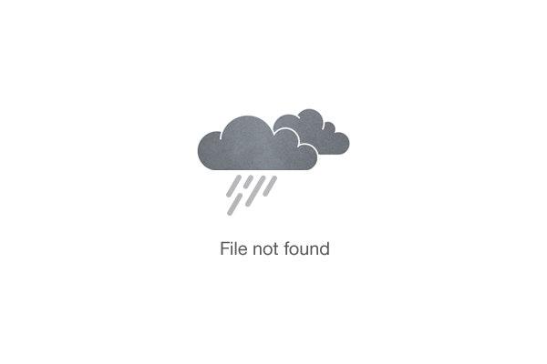 ATV Quad Bike driving in the Jungle (DRIVER)
