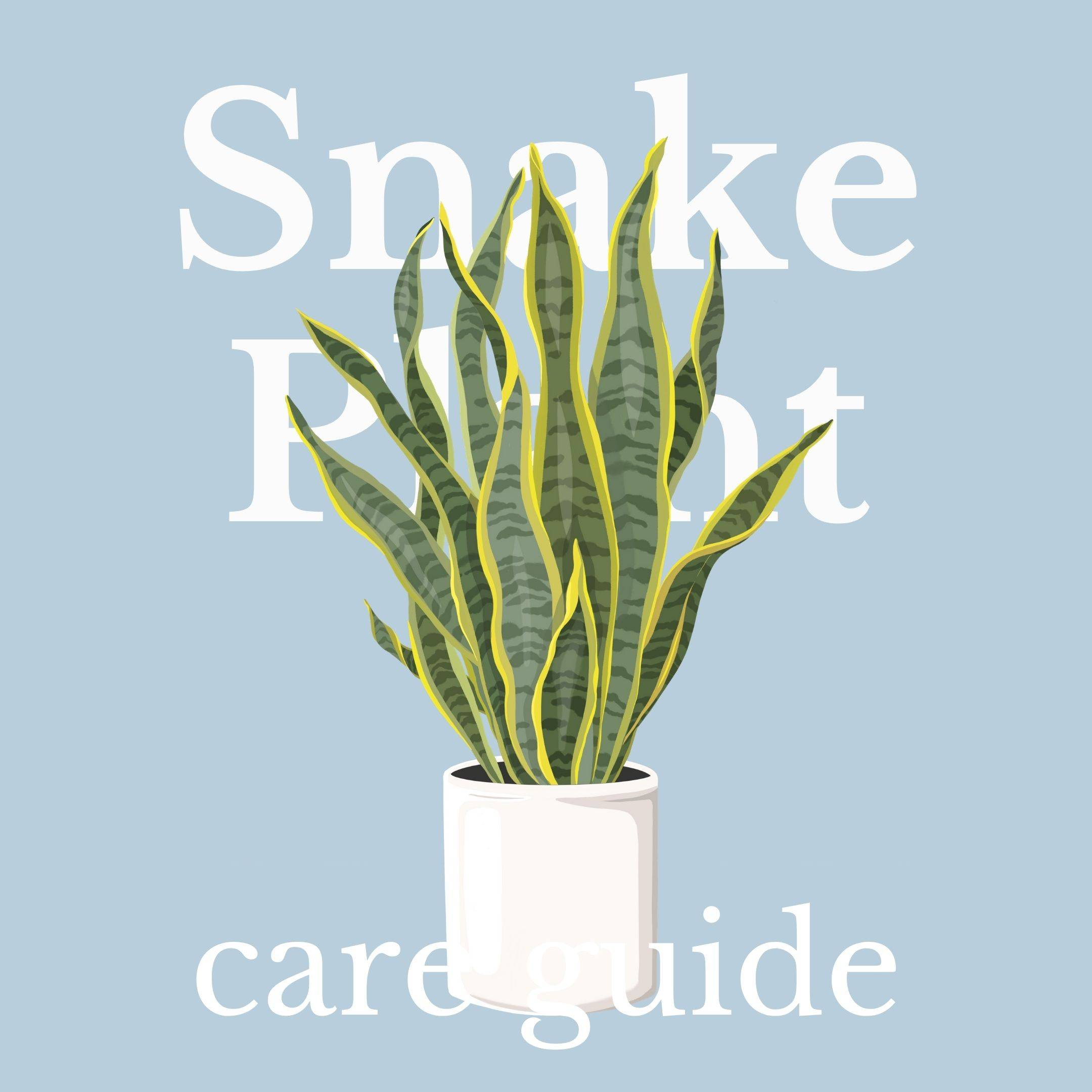 Drawing of Snake Plant